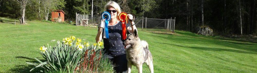 Uudenmaan Hirvikoirakerho – Nylands Älghundklubbens